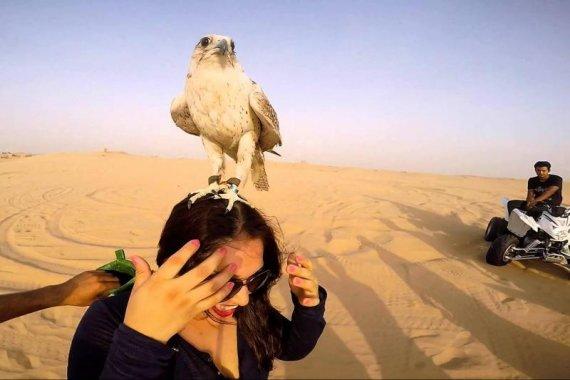 safari with falcon